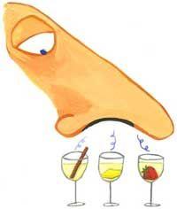 L'esame olfattivo del vino: le basi della degustazione